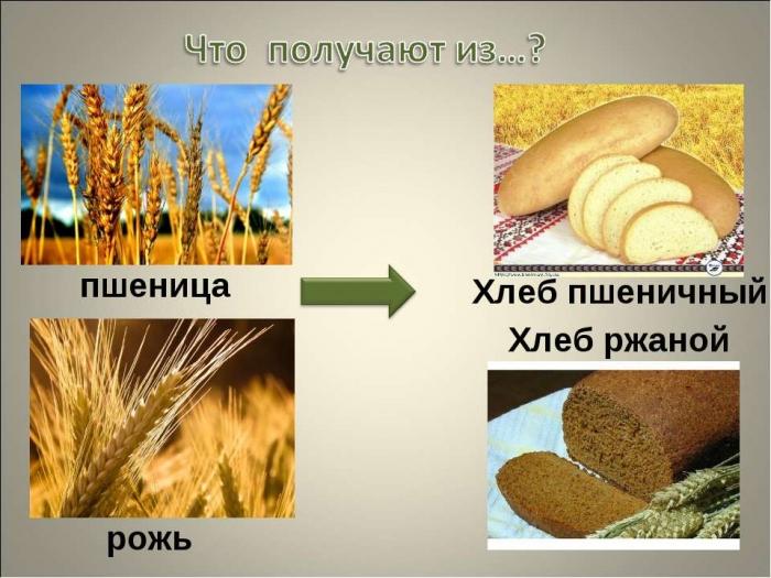 Отличия пшеницы и ржи